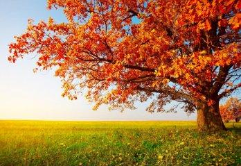 Autumn Statement 2015 Key Tax Points